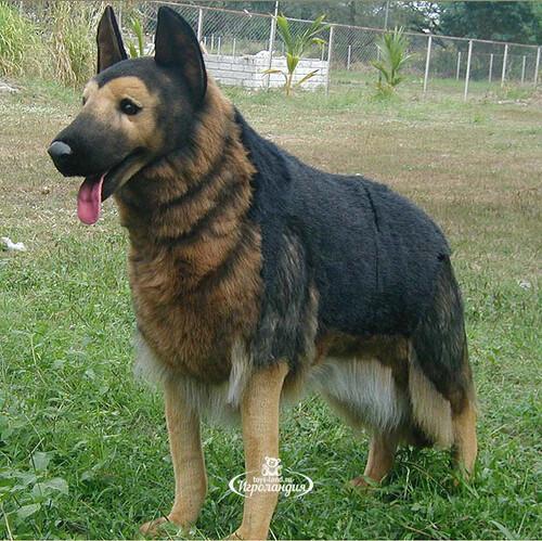 огромная немецкая овчарка
