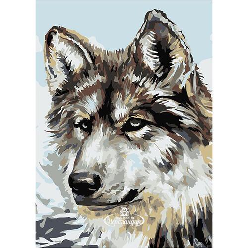 раскраска по номерам серый волк 30 21 см